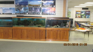 community tank on right, native tank on left