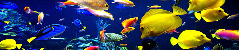 Aquarium fish Sanctuary